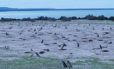 penguin_colony