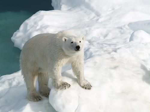 bear_looking_up