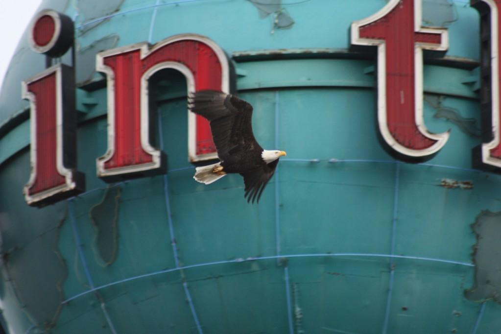 eagle_over_pi